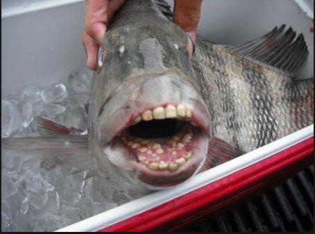 Vanderbilt cup races blog mystery foto 37 solved for Sheepshead bay fishing